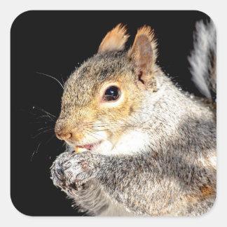 Adesivo Quadrado Esquilo que come uma porca