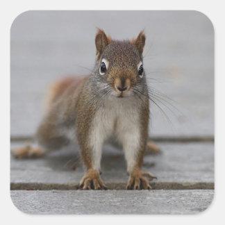 Adesivo Quadrado Esquilo vermelho