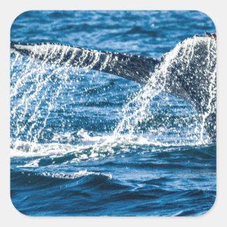 Adesivo Quadrado Estado de Washington da baleia de Humpback