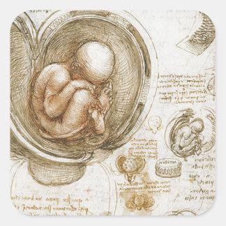 Adesivo Quadrado Estudos de Leonardo da Vinci do feto no ventre