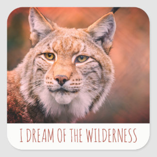 Adesivo Quadrado Eu sonho do lince da região selvagem