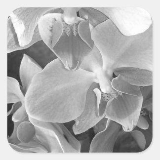 Adesivo Quadrado Feche acima das flores da orquídea na escala