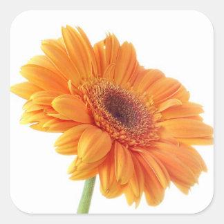 Adesivo Quadrado Festa de casamento alaranjada floral da flor da