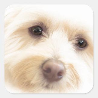 Adesivo Quadrado Filhote de cachorro celestial