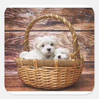 Adesivo Quadrado filhotes de cachorro malteses na cesta