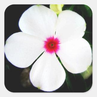 Adesivo Quadrado Flor branca pequena do Vinca