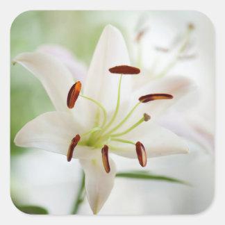 Adesivo Quadrado Flor do lírio branco inteiramente aberta