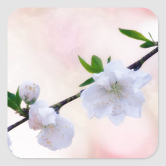 Adesivo Quadrado Flor do pêssego