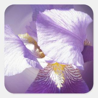 Adesivo Quadrado flor roxa da íris