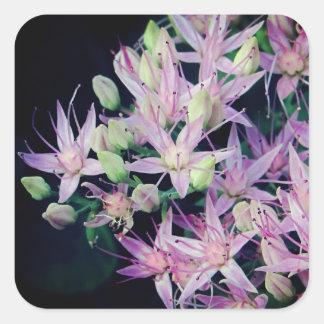 Adesivo Quadrado Flor roxa do Stonecrop