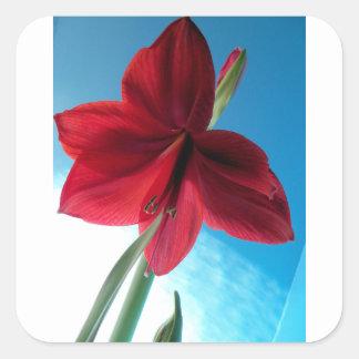 Adesivo Quadrado flor vermelha vívida do Amaryllis 108a