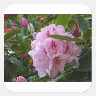 Adesivo Quadrado flores cor-de-rosa com orvalho