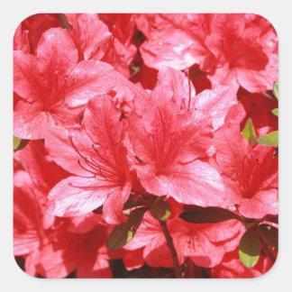 Adesivo Quadrado flores do vermelho da azálea