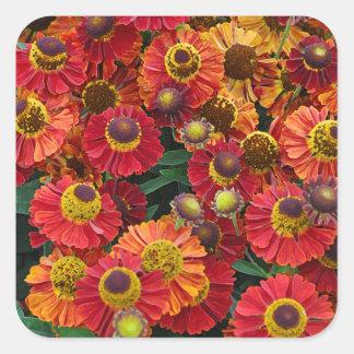 Adesivo Quadrado Flores vermelhas e alaranjadas do helenium