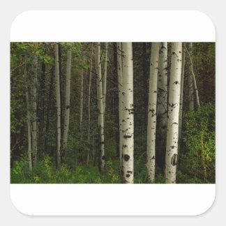 Adesivo Quadrado Floresta branca