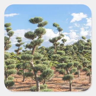 Adesivo Quadrado Formas bonitas do topiary nas coníferas