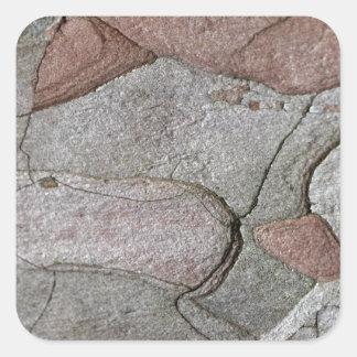 Adesivo Quadrado Foto macro do latido do pinho