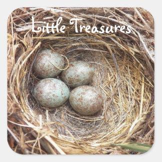 Adesivo Quadrado Foto pequena dos ovos de ninho do pássaro dos