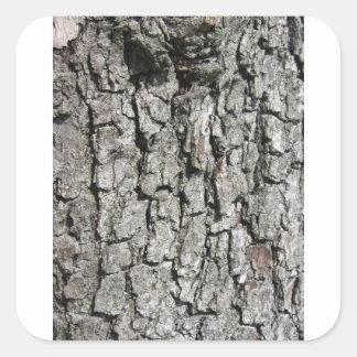 Adesivo Quadrado Fundo da textura do latido de árvore da pera