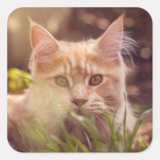 Adesivo Quadrado gato