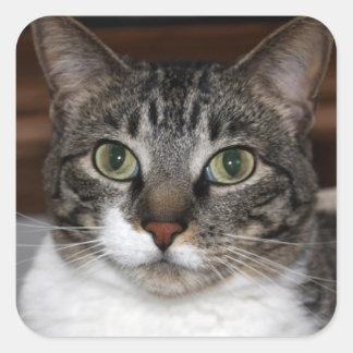 Adesivo Quadrado Gato de gato malhado que olha o foto