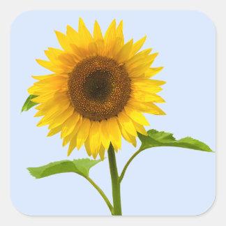 Adesivo Quadrado Girassol amarelo floral, amor da flor