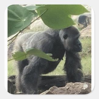 Adesivo Quadrado Gorila do Silverback
