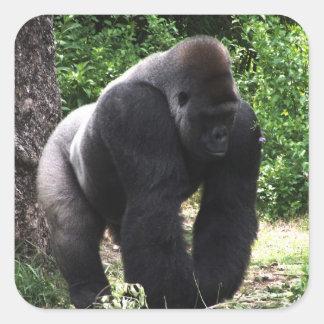 Adesivo Quadrado Gorila masculino down.jpg principal de passeio do