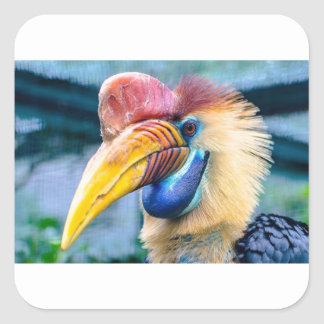 Adesivo Quadrado Hornbill vermelho e amarelo