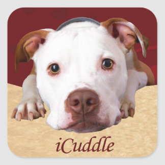 Adesivo Quadrado iCuddle Pitbull