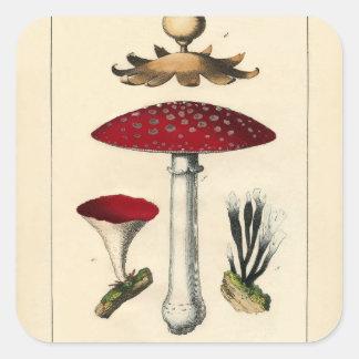 Adesivo Quadrado Impressão botânico do cogumelo do vintage