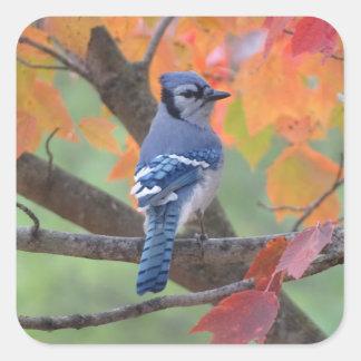 Adesivo Quadrado Jay azul