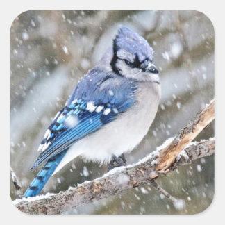 Adesivo Quadrado Jay azul em uma tempestade de neve