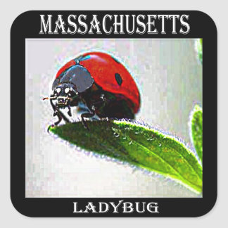 Adesivo Quadrado Joaninha de Massachusetts