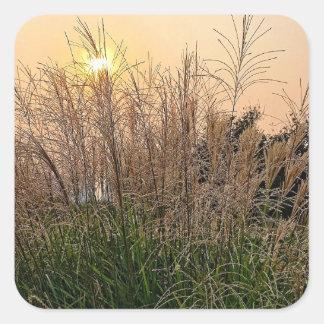 Adesivo Quadrado Junco no por do sol