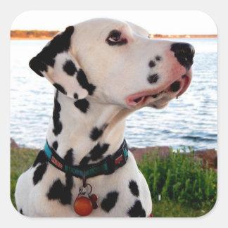 Adesivo Quadrado Kevin o Dalmatian