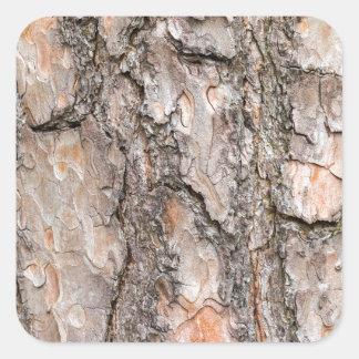Adesivo Quadrado Latido do pinheiro escocês como o fundo