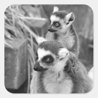 Adesivo Quadrado lemur Anel-atado com o bebê preto e branco