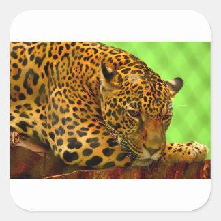 Adesivo Quadrado Leopardo no registro de Brown