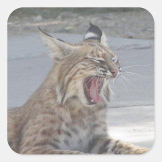 Adesivo Quadrado Lince de bocejo