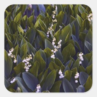 Adesivo Quadrado Lírio do remendo da flor do vale com matiz azul
