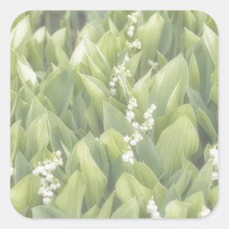 Adesivo Quadrado Lírio do remendo da flor do vale na névoa