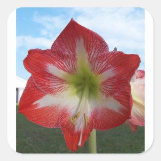 Adesivo Quadrado MegaStar2 vermelho e branco do Amaryllis 106a