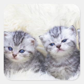 Adesivo Quadrado Ninho com os quatro gatos de gato malhado novos em