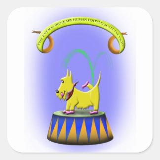 Adesivo Quadrado o cão footed humano extraordinário do scottie