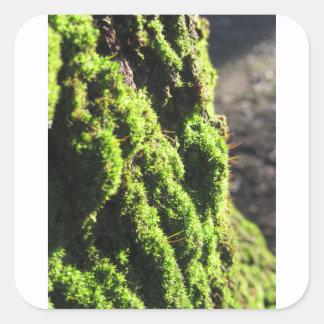Adesivo Quadrado O musgo verde no detalhe da natureza de musgo