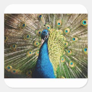 Adesivo Quadrado O pavão bonito