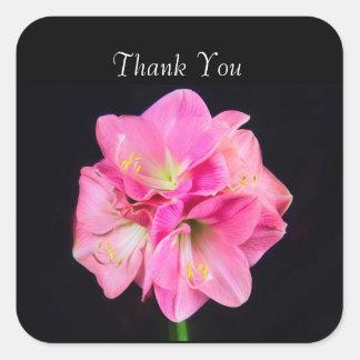 Adesivo Quadrado Obrigado que o Amaryllis cor-de-rosa personaliza