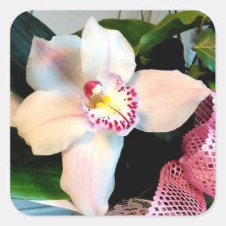 Adesivo Quadrado Orquídea branca do Cymbidium
