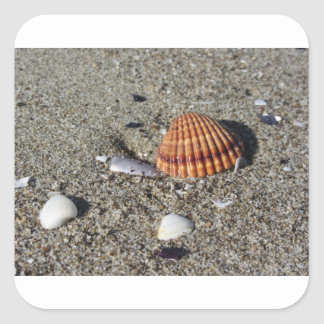 Adesivo Quadrado Os Seashells no verão da areia encalham a opinião